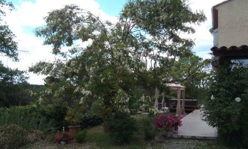 Jardin maison d'hôte de la pinède de Manon Barjols